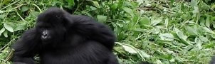 Uganda Gorilla Flying Safaris
